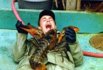 angry-lobsters1