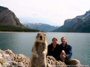 Rocky the Squirrel in Banff